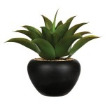 images/product/150/064/3/064366/aloe-vera-pot-crmq-h37_64366_2