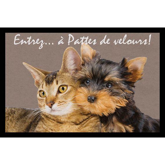 Site de chat et rencontre maroc