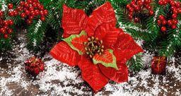 Les fleurs de Noël