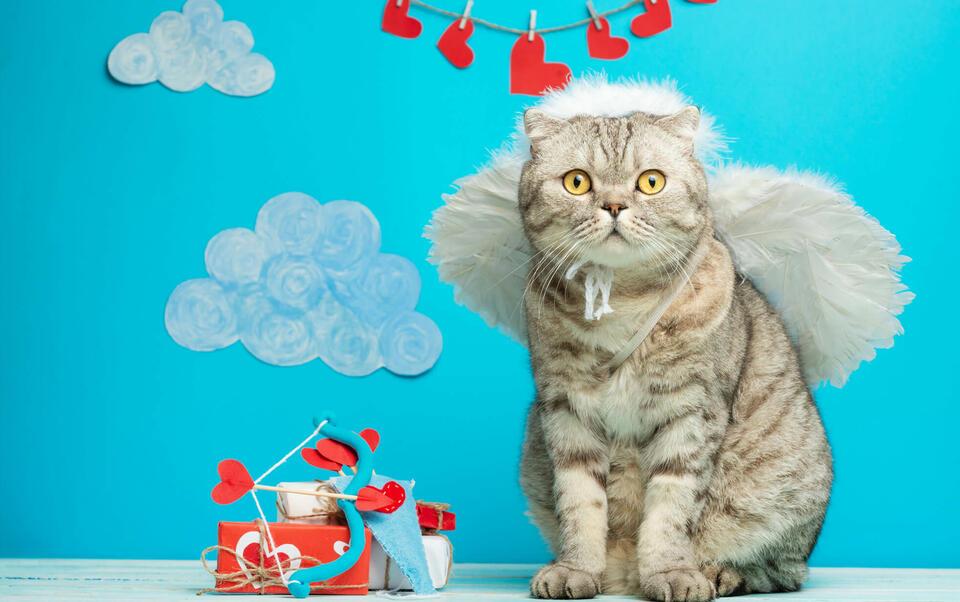 chat cupidon de saint valentin